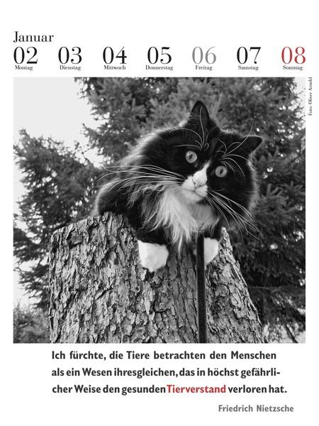 literarischer-katzenkalender-2017-januarblatt-mit-nietzsche-zitat